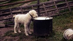 Milk, Dog, White, Puppy, Food, Animal, Cute, Pet