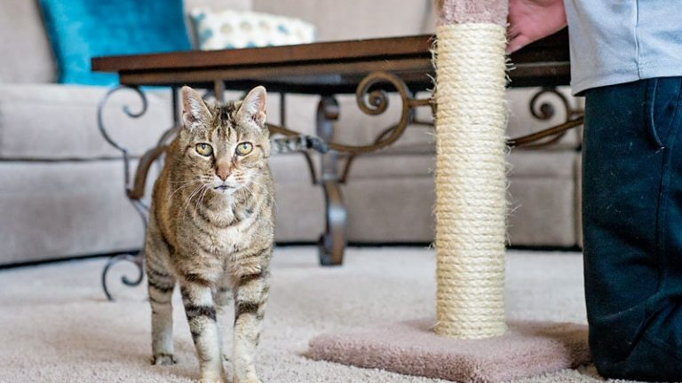 8 Tips to Get Your Cat Use the Scratching Poles